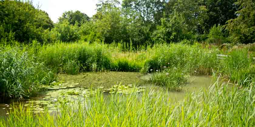 Hotham Park Conservation area